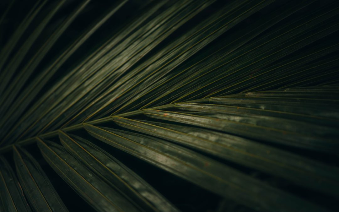 Perivoj Esperia – perivoj palmi